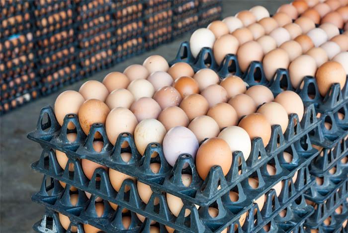 different eggs copy