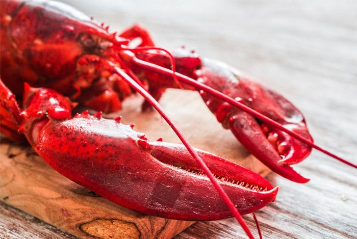 avoid lobster