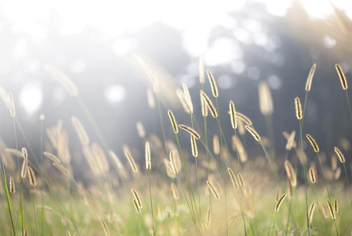 vitamin D sunshine