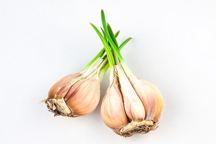 best of garlic