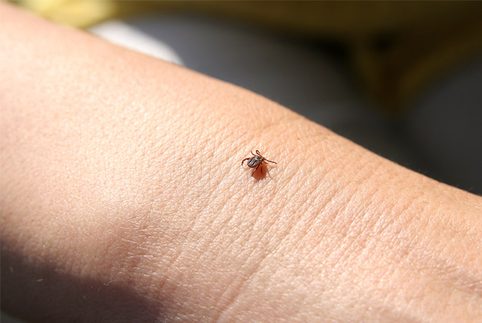 avoid tick bites