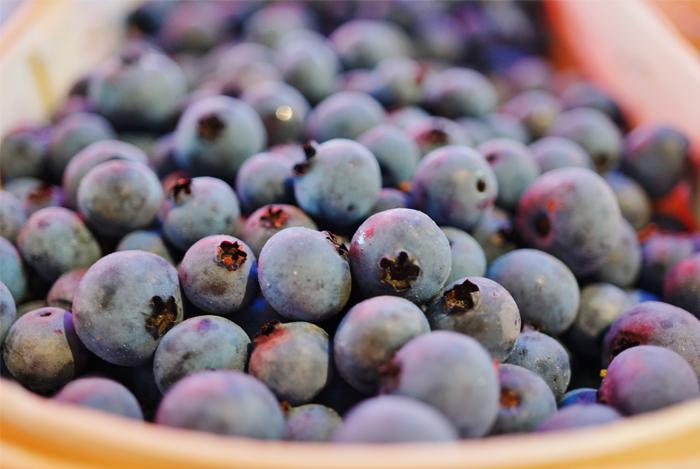 best blueberries