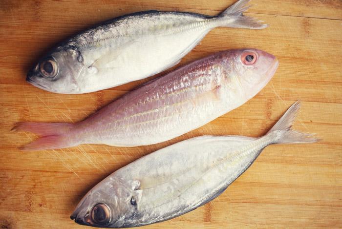 fish bladder