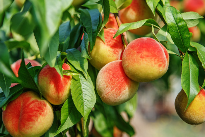 MSG in pesticides