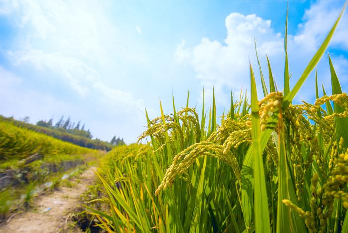 nutritious GMO