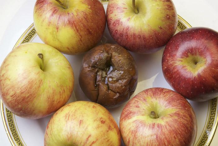 one rotten apple