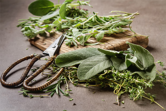 Get Back to Nature: The Best Herbs for Your Body